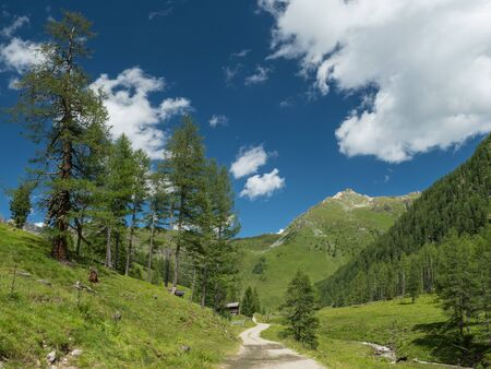 Alpine valley with trees, dirt road and pastures, Hohe Tauern NP, Austria Standard-Bild