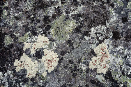 Texture of the surface of the completely lichen covered rock Standard-Bild