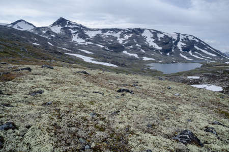 Summer landscape of mountains and lichens tundra in Jotunheimen national park, Norway, Scandinavia