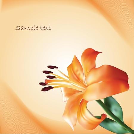 pollinate: orange vector lilium on abstract background Illustration