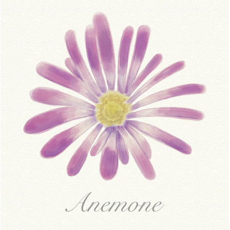 Violet anemone isolated on a watercolor paper background with its name