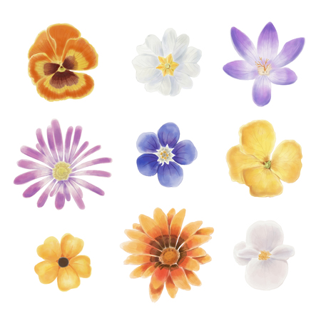 Watercolor spring flowers isolated on a white background Reklamní fotografie