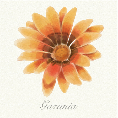 Yellow, orange and brown gazania isolated on a watercolor paper background with its name