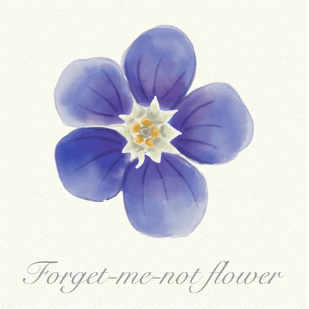Blue forget-me-not flower isolated on a watercolor paper background with its name