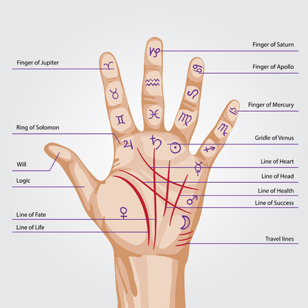 palm reading: Palmistry map on open palm. vector illustration.