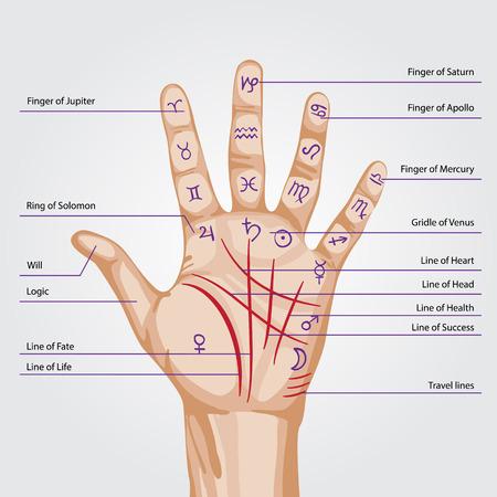 Palmistry map on open palm. vector illustration.