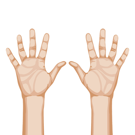 human palm: Two palms. Vector illustration.