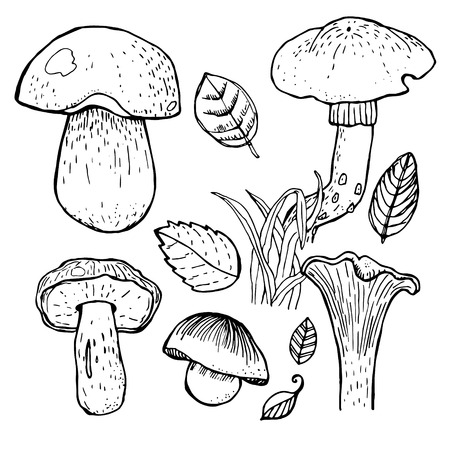 boletus: Set of different mushrooms.