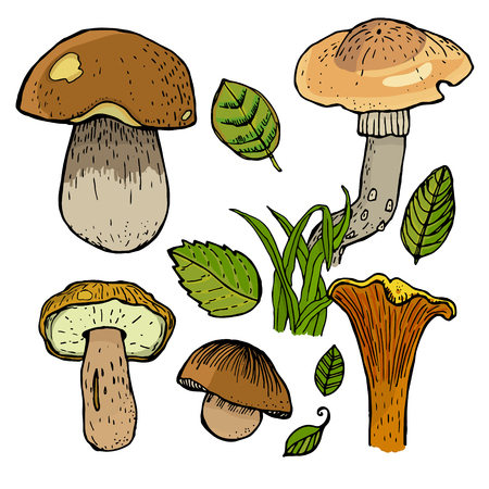 grebe: Set of different mushrooms.
