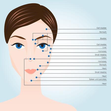 Acupunctuurpunten op het gezicht. vector illustratie