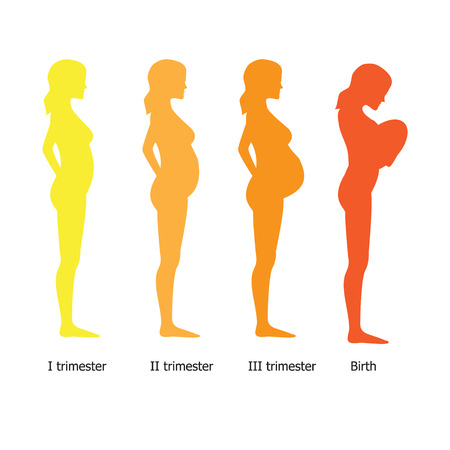 trimester: Infographic of pregnant woman in different period. Vector illustration