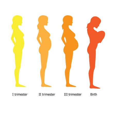 Infographic van zwangere vrouw in verschillende periode. Vector illustratie Stock Illustratie