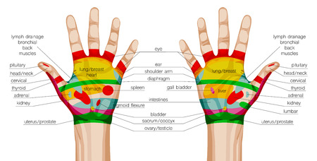 reflexology: acupuncture hands scheme. vector illustration