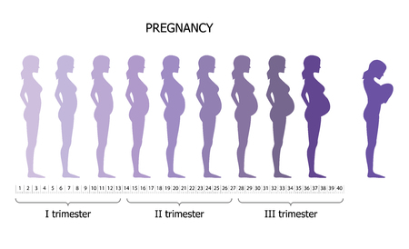 moms: Infographic of pregnant woman in different period. Vector illustration