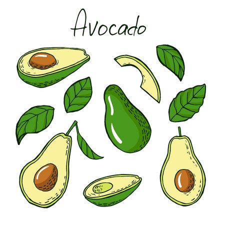 morsel: Avocado and leafs in sketch style. Vector illustration Illustration
