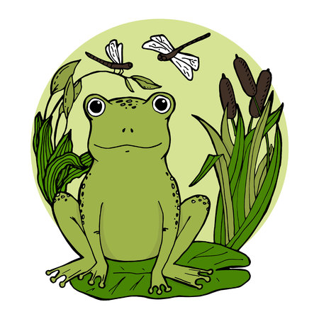 Frog in swamp at lily leaf in canes with dragonflies. Vector illustration