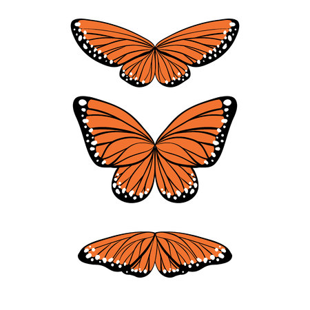 to flit: Set of butterflies in orane, black and white colors in different poses. Vector illustration