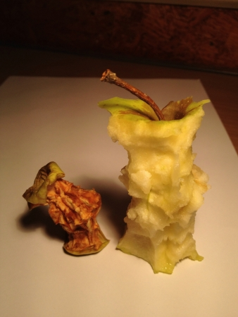 rotting: Eaten and rotting apples