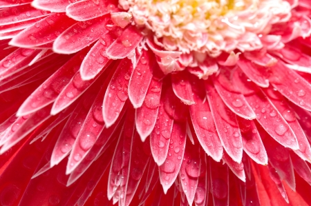 Pink petals background photo