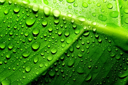 dews: Green leaf with drops of water Stock Photo