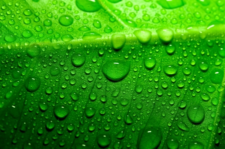 leaf water drop: Green leaf with drops of water Stock Photo
