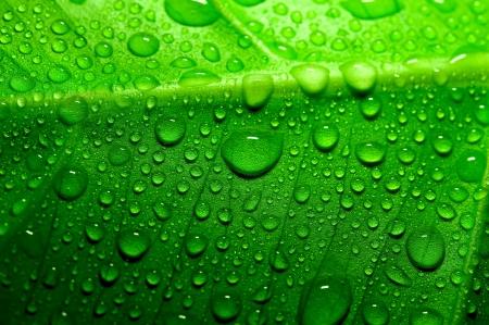Verde foglia con gocce d'acqua Archivio Fotografico