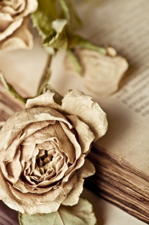Dry rose and old book