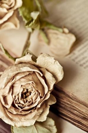 Dry rose und altes Buch Standard-Bild - 16573227