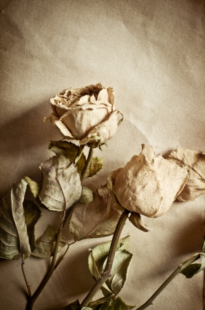 Dry roses and old book  photo
