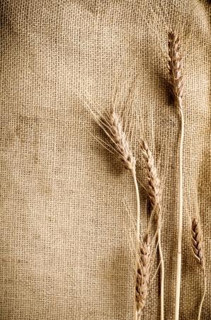 Wheat on sacking fabric photo