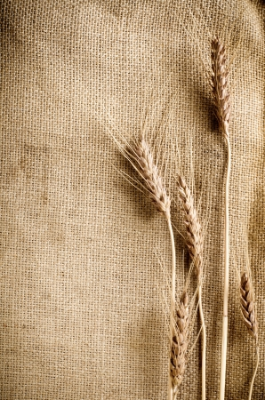 sackcloth: Wheat on sacking fabric