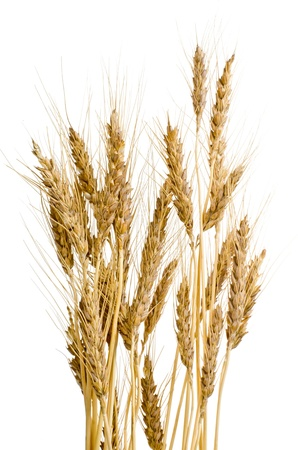Ears of wheat on isolated white background photo