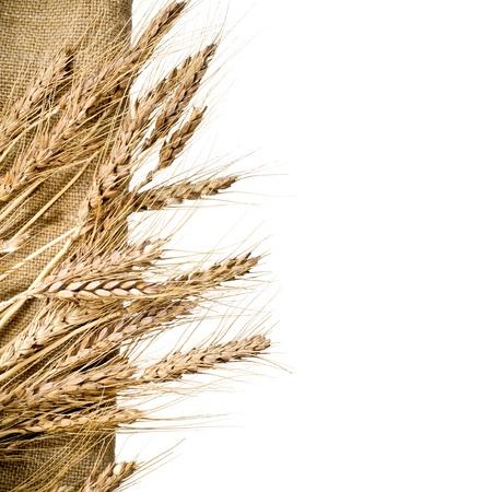 Weizen und Sackleinen Stoff auf weißem Hintergrund isoliert Standard-Bild - 17538086