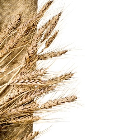 Wheat and burlap fabric on isolated white background