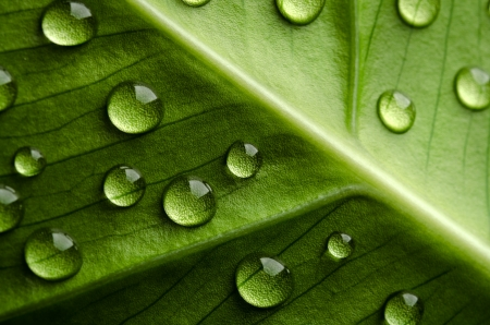 leaf close up: Green leaf with drops of water Stock Photo