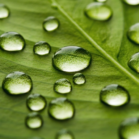 Green leaf with drops of water photo