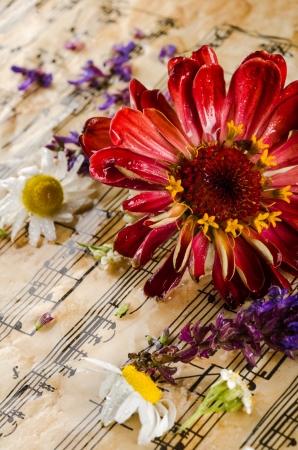 Vintage Stilleben mit Wildblumen Standard-Bild - 20393666