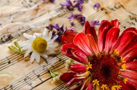 sonata: Vintage still life with wildflowers