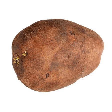 Potatoe isolated on white abckground photo