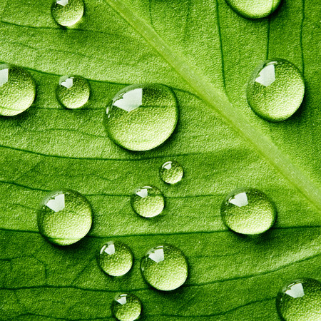 water droplet: Green leaf with drops of water close up