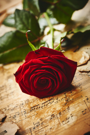 Red rose on vintage music sheets photo