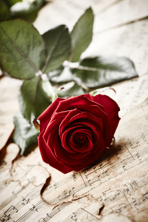 Beautiful Red rose on vintage music sheets photo