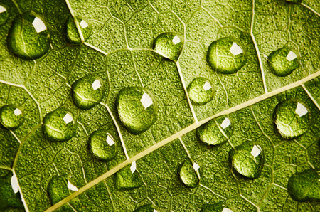 leaf close up: Green leaf close up with drops of water Stock Photo