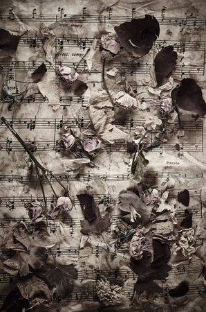 old sheet music: Dry roses on vintage paper background Stock Photo