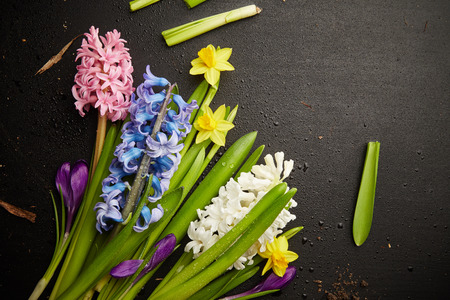 Beautiful hyacinths and narcissus with drops of water on black background photo