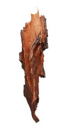 roble arbol: Corteza de árbol aislado sobre fondo blanco