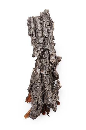 tree  oak: Corteza de �rbol aislado sobre fondo blanco