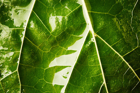 leaf close up: Wet green leaf close up Stock Photo