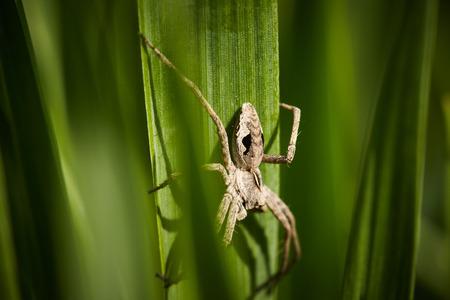 leaf close up: Spider on green leaf close up. Nature background