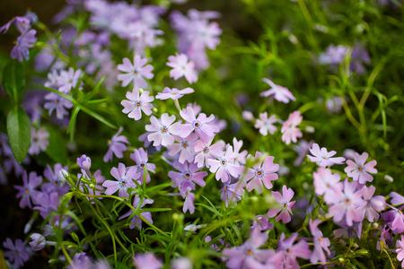 champ de fleurs: Belles fleurs sur le terrain. Nature background